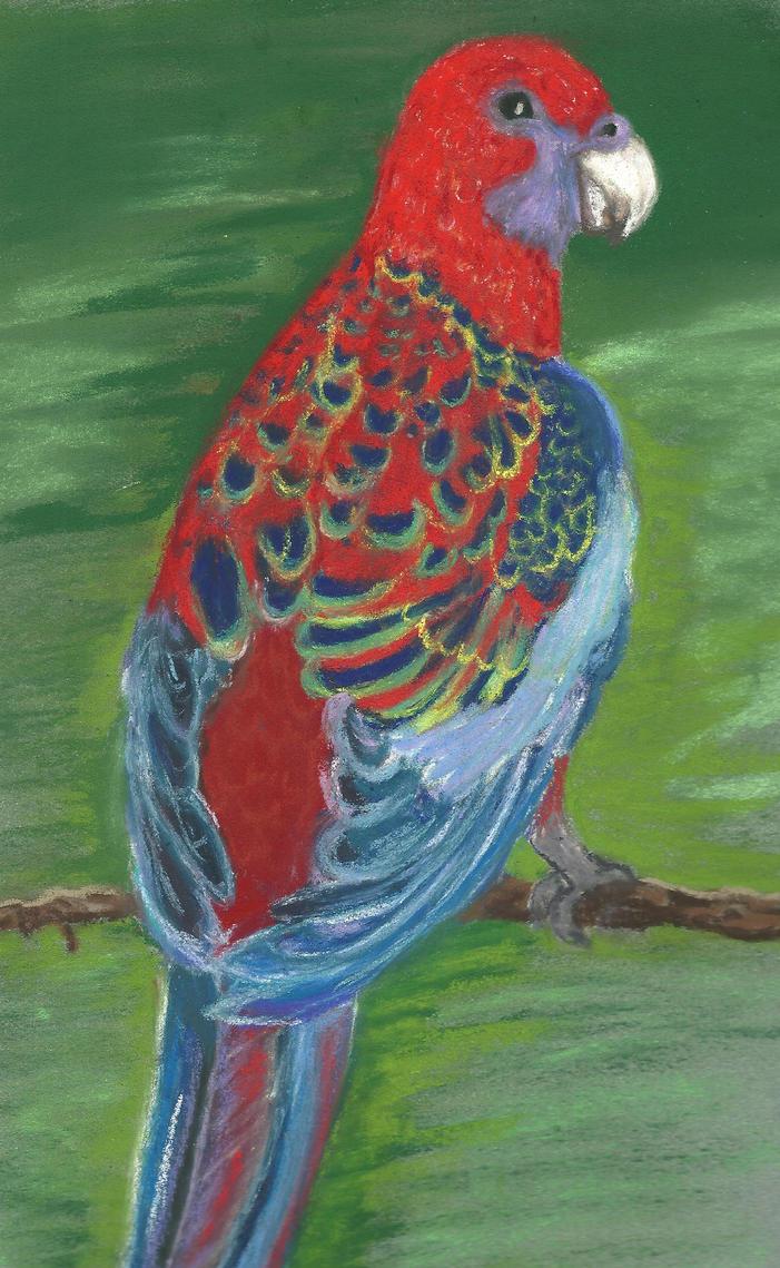 Parrot by Adutelluma