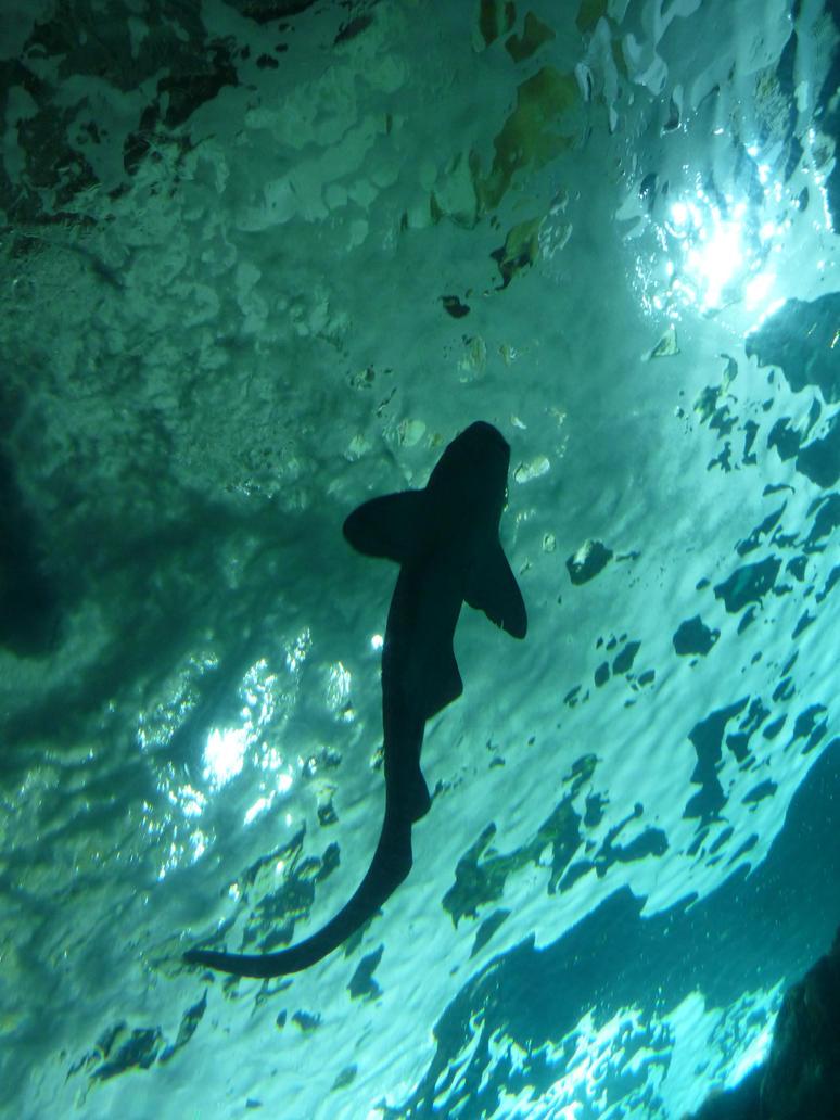 Shark by Adutelluma