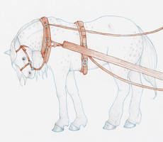 Draft Horse - Colored