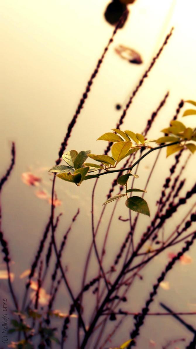 Tranquility by HiddenLenze