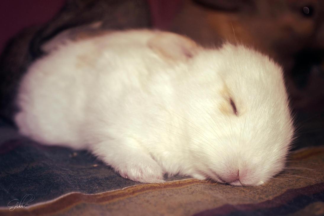 Sleeping Iris (My Baby Bunny 7) by Scyrielle on deviantART