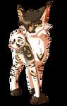 [COM] Leopardfrost