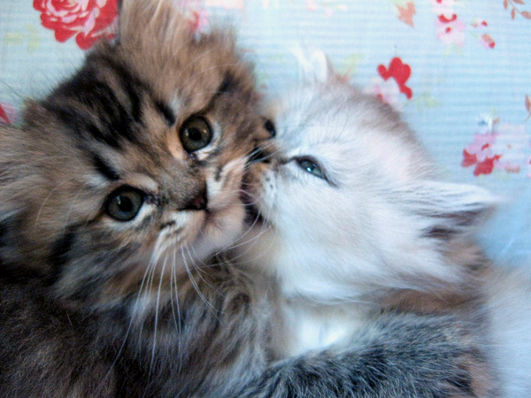 Kittens XLIII by sunnyxshine