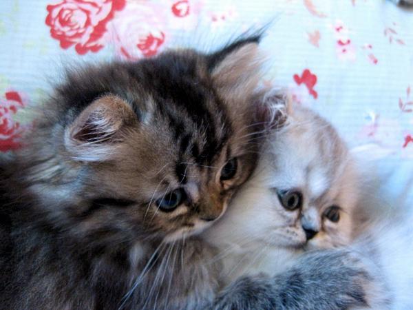 Kittens XLIV by sunnyxshine