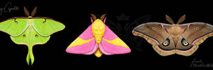 Luna, Rosy Maple, and Polyphemus Moths