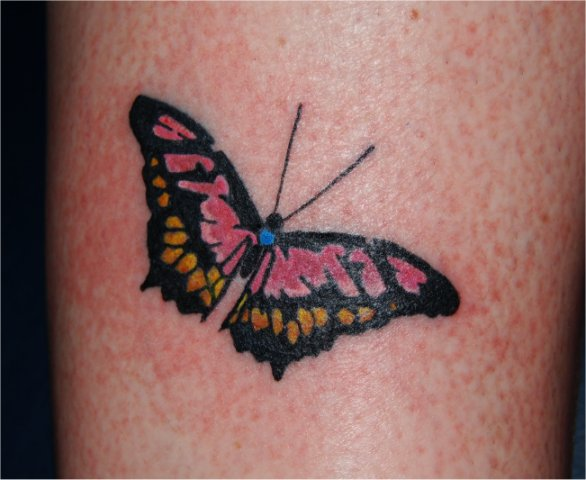 Butterfly on calf