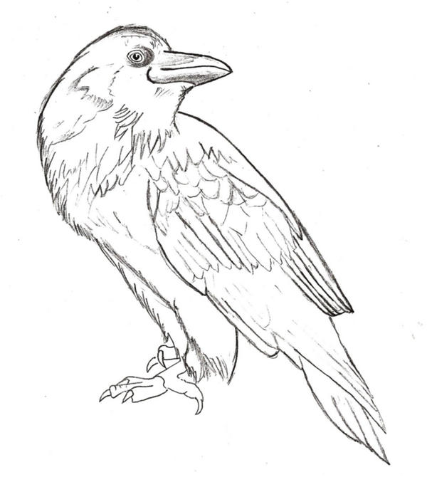 Line Drawing Animal Tattoos : Crow lines by hotwheeler on deviantart