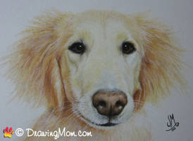 Drawing of Charley