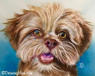 Tino by DrawingMom