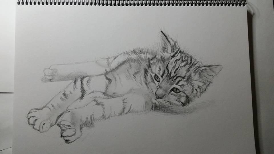 Sketch of my kitten by Sarah-Janee
