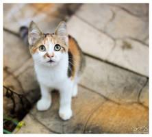 Kitten by BigCountryGraphix