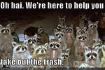 raccoons want's to help to take out your trash.