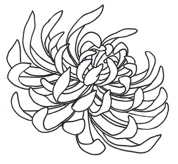Chinese Flower Line Drawing : Spider chrysanthemum by sneakyguy on deviantart