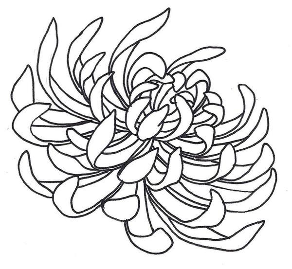 Spider Chrysanthemum by sneakyguy on DeviantArt