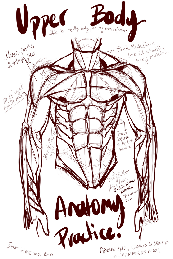 Abs and Upper Body Anatomy Practice by L-O-R-D-G-R-E-G on DeviantArt