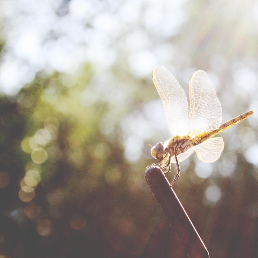 dragonfly by yzar