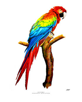 Macaw Parrot - Highlighter Art