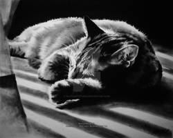 Sleeping Cat, Charcoal, by Michael Slotwinski