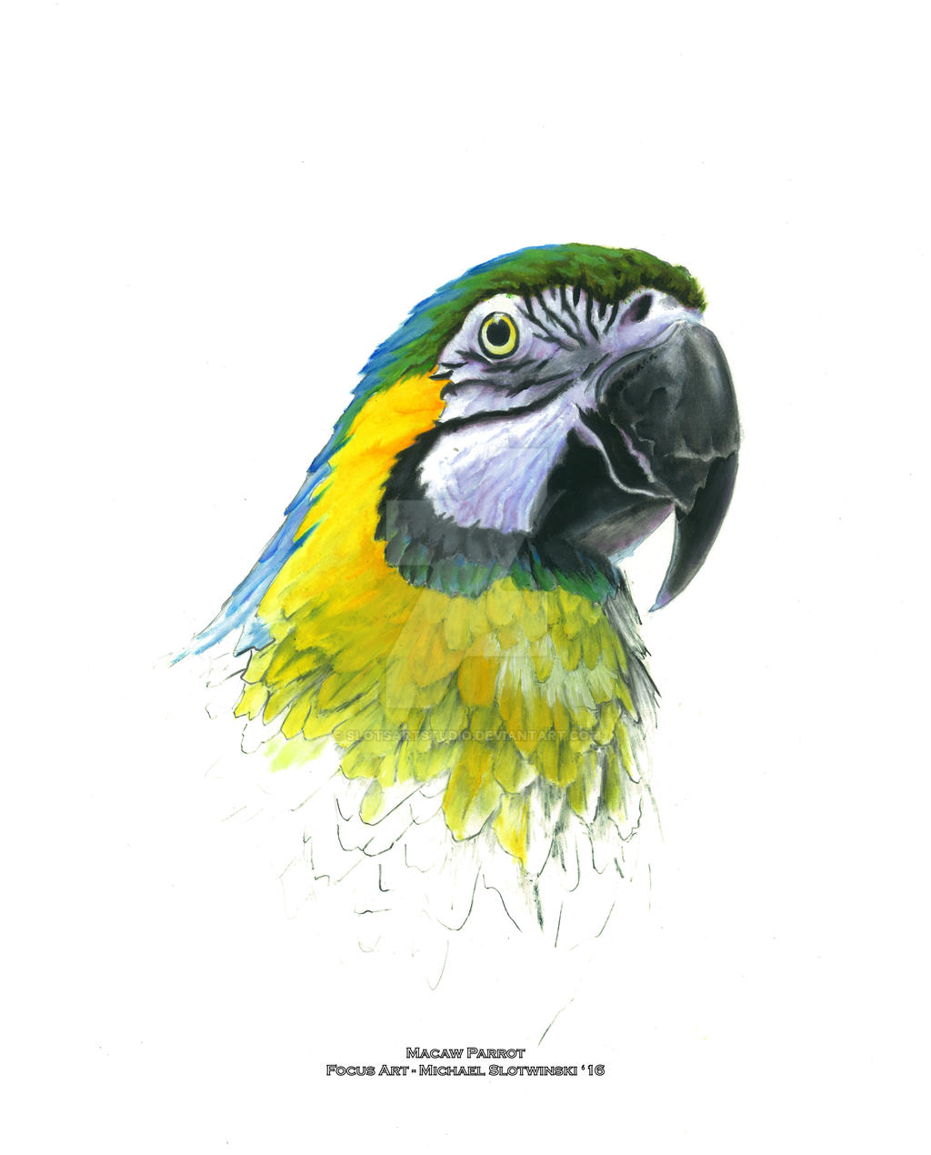 blue green and yellow macaw parrot focus art by slotsartstudio