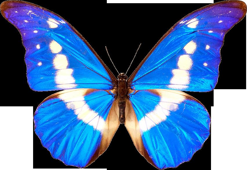 3d effect butterfly wallpaper