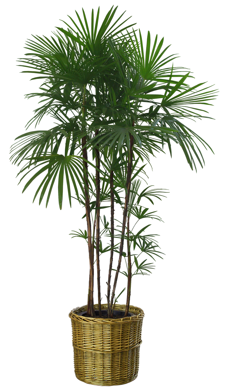 plant by DIGITALWIDERESOURCE on DeviantArt for Plant Transparent Png  55jwn
