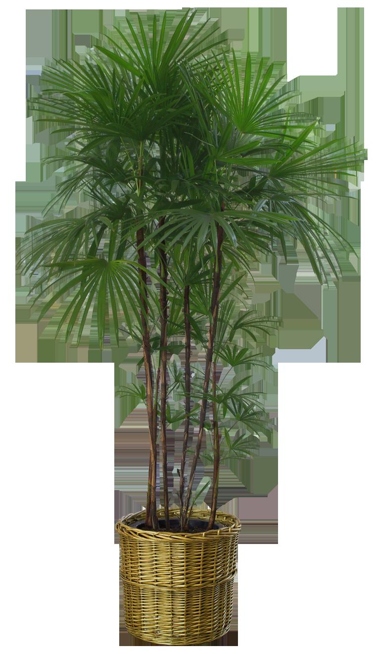 plant by DIGITALWIDERESOURCE on DeviantArt for Plant Transparent Png  55jwn