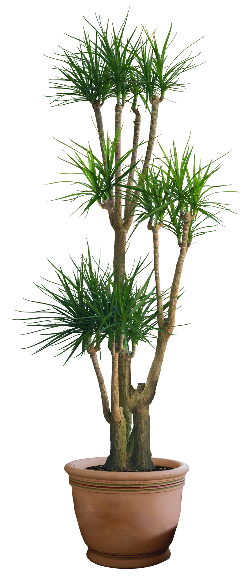 Plant png 3 by digitalwideresource on deviantart for Plante yucca chat