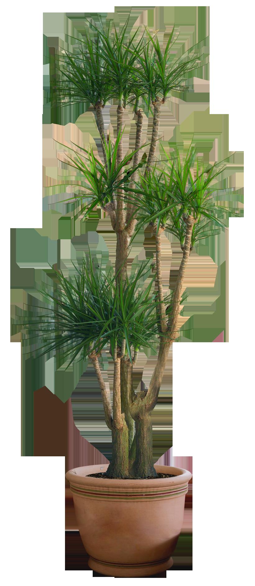 plant png 3 by DIGITALWIDERESOURCE on DeviantArt