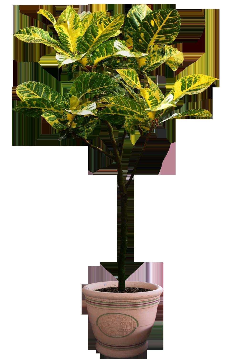 plant png 5 by DIGITALWIDERESOURCE on DeviantArt