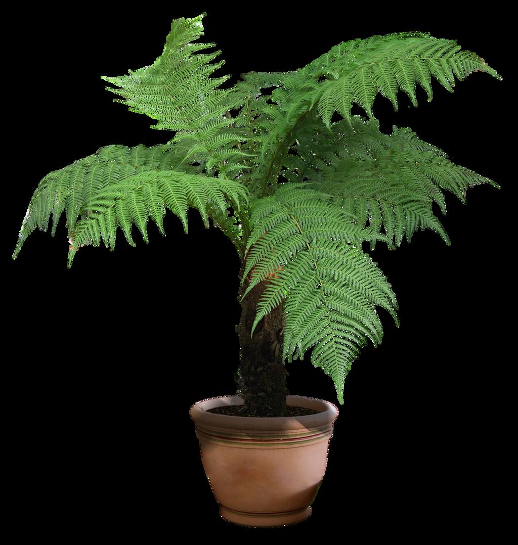 plant png 7 by DIGITALWIDERESOURCE on DeviantArt