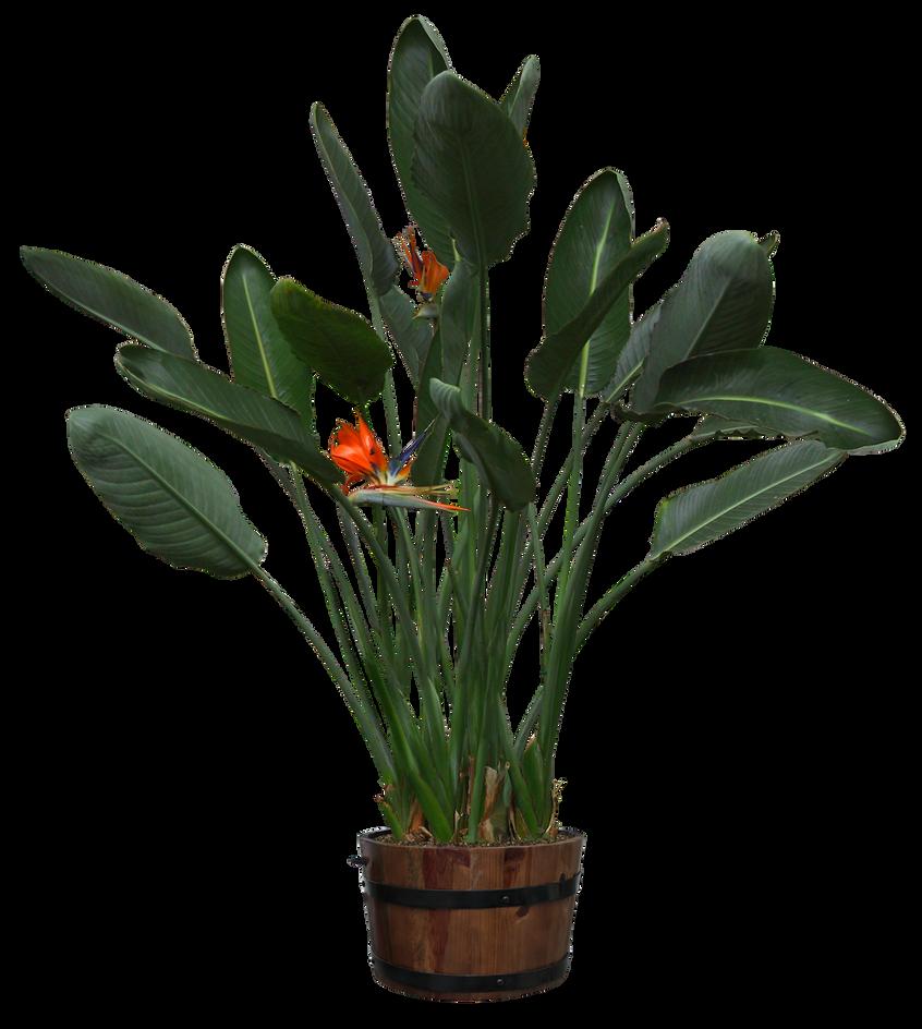 plants png-21 by DIGITALWIDERESOURCE on DeviantArt