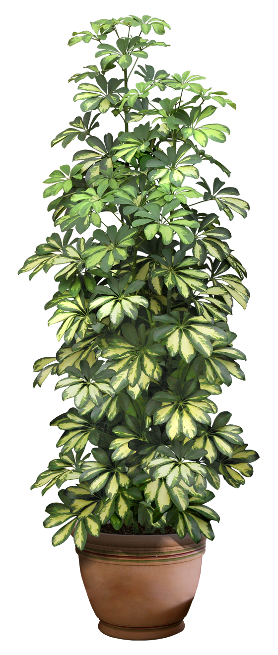 plant png 8 by DIGITALWIDERESOURCE on DeviantArt