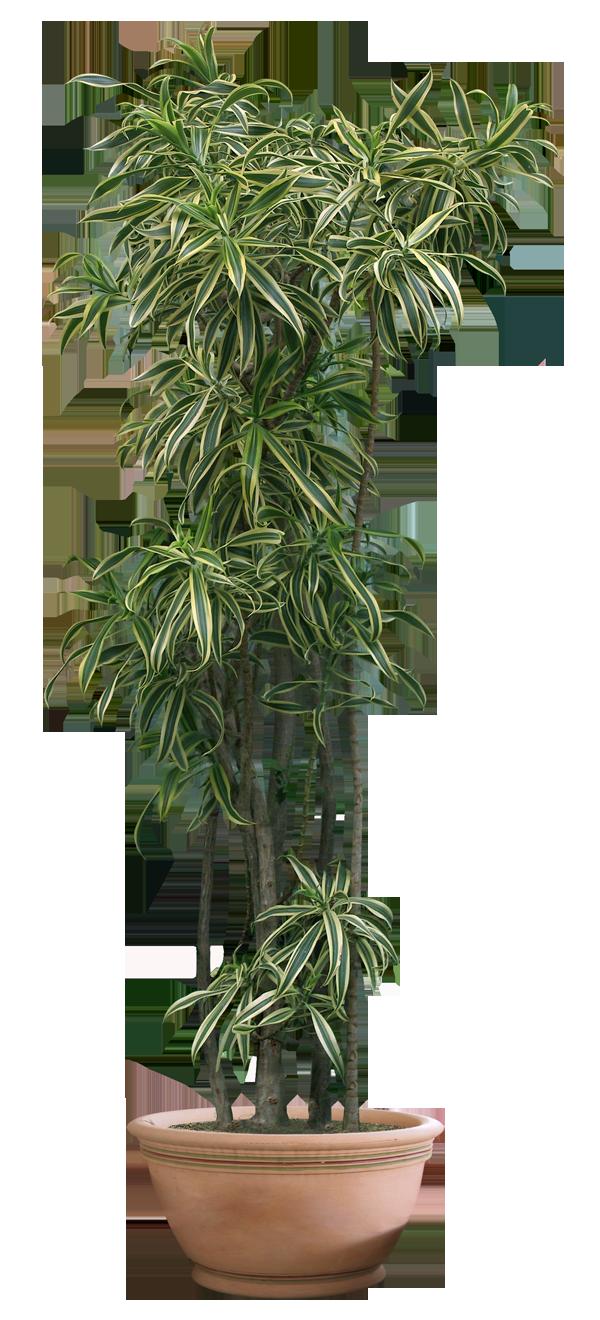 plant png 10 by DIGITALWIDERESOURCE on DeviantArt