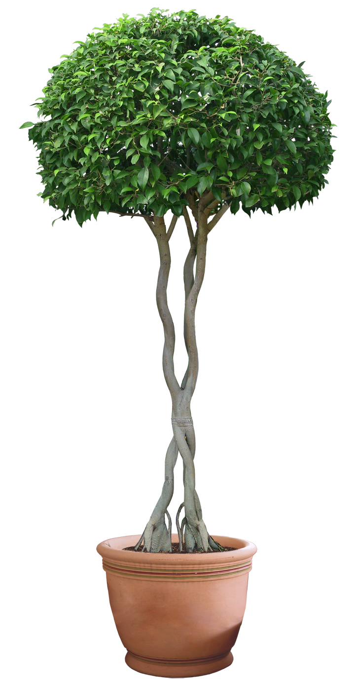 Растение Happy Plant Бальзамин огонек hpd-3