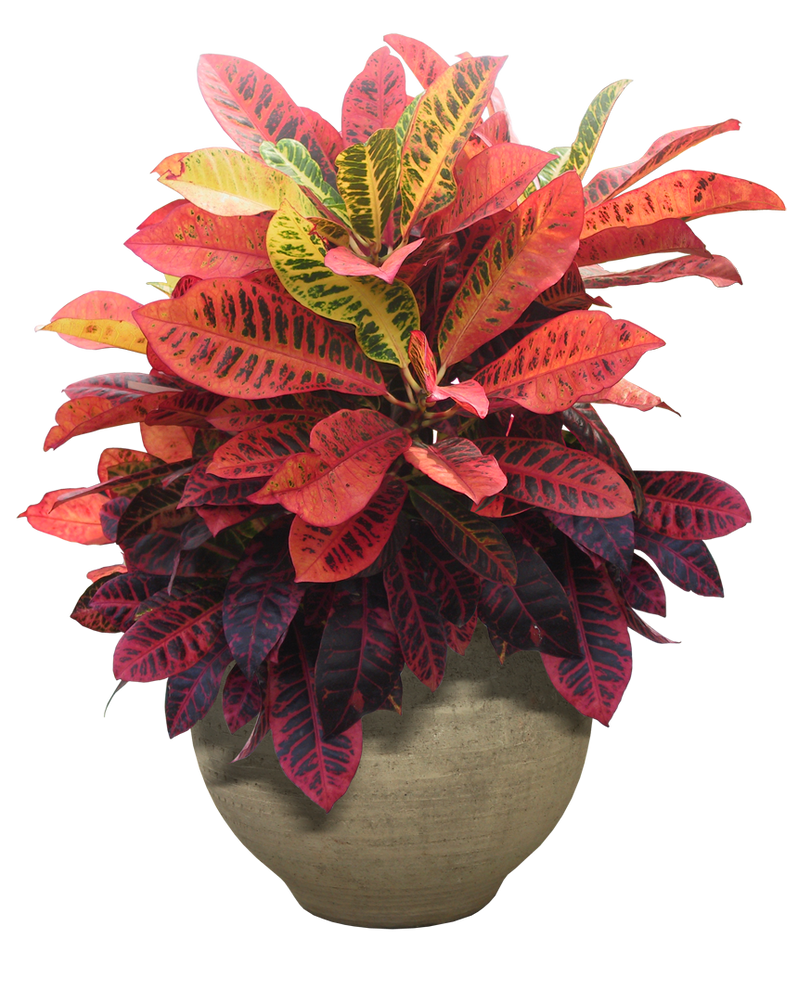 plant png 14 by DIGITALWIDERESOURCE on DeviantArt