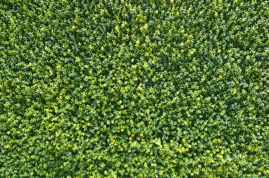 bush texture by DIGITALWIDERESOURCE on DeviantArt