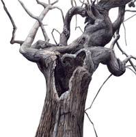 Gloom Tree by peet