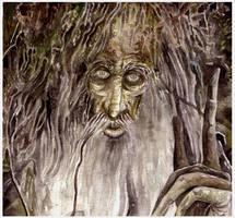 Treebeard/Fangorn by peet