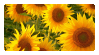 Sunflower Stamp by K3NNA