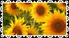 Sunflower Stamp by K3NNA