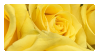 Yellow Rose Stamp by K3NNA