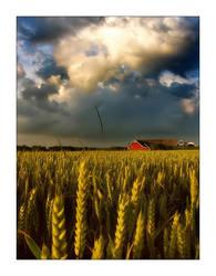 In The Field by bliitz