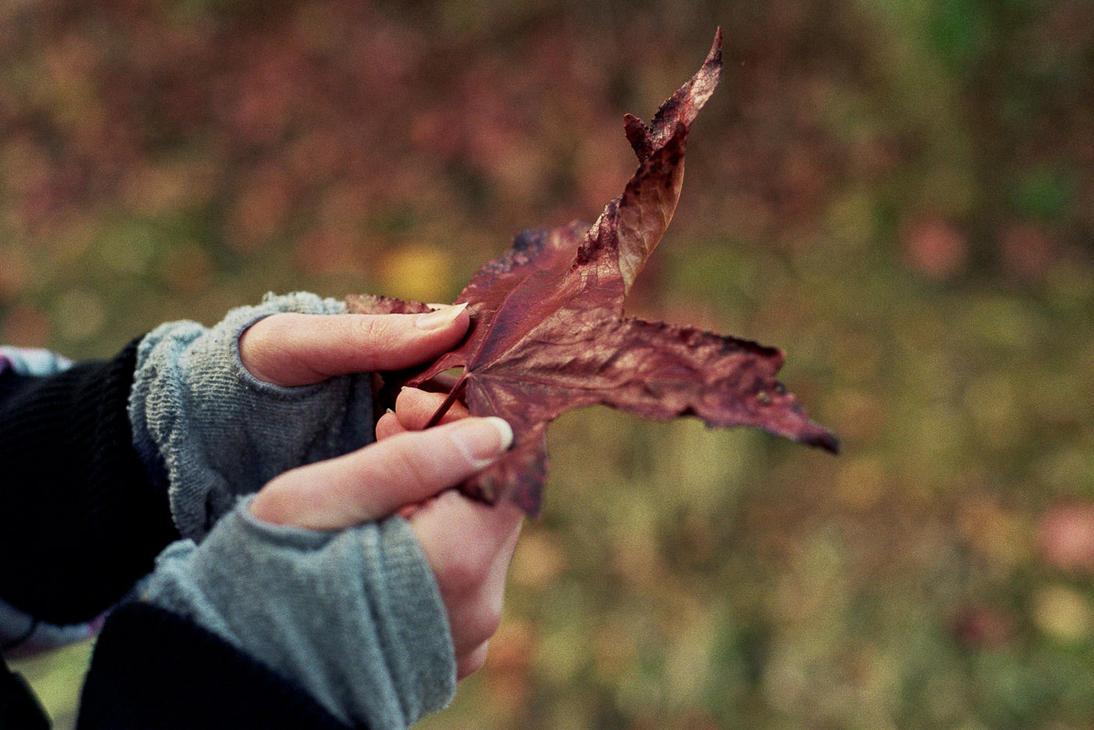 The Album Leaf by pyros