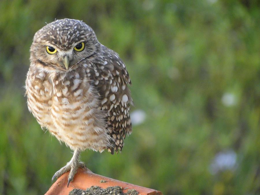 Angry Bird by marcelakopko