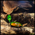 GREEN BEETLES by IME54-ART