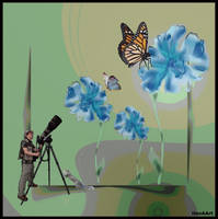 THE BUTTERFLY  PHOTOGRAPHER