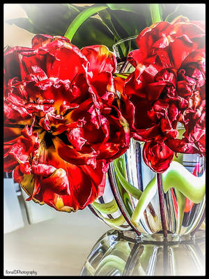 HANGING OLD CURL TULIPS by IME54ARTILONA