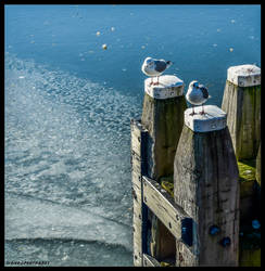 SEAGULLS ON A COLD DAY !