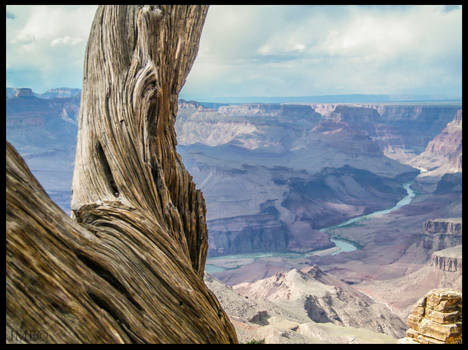 VIEW OVER THE GRAND CANYON WITH THE COLORADO RIVER