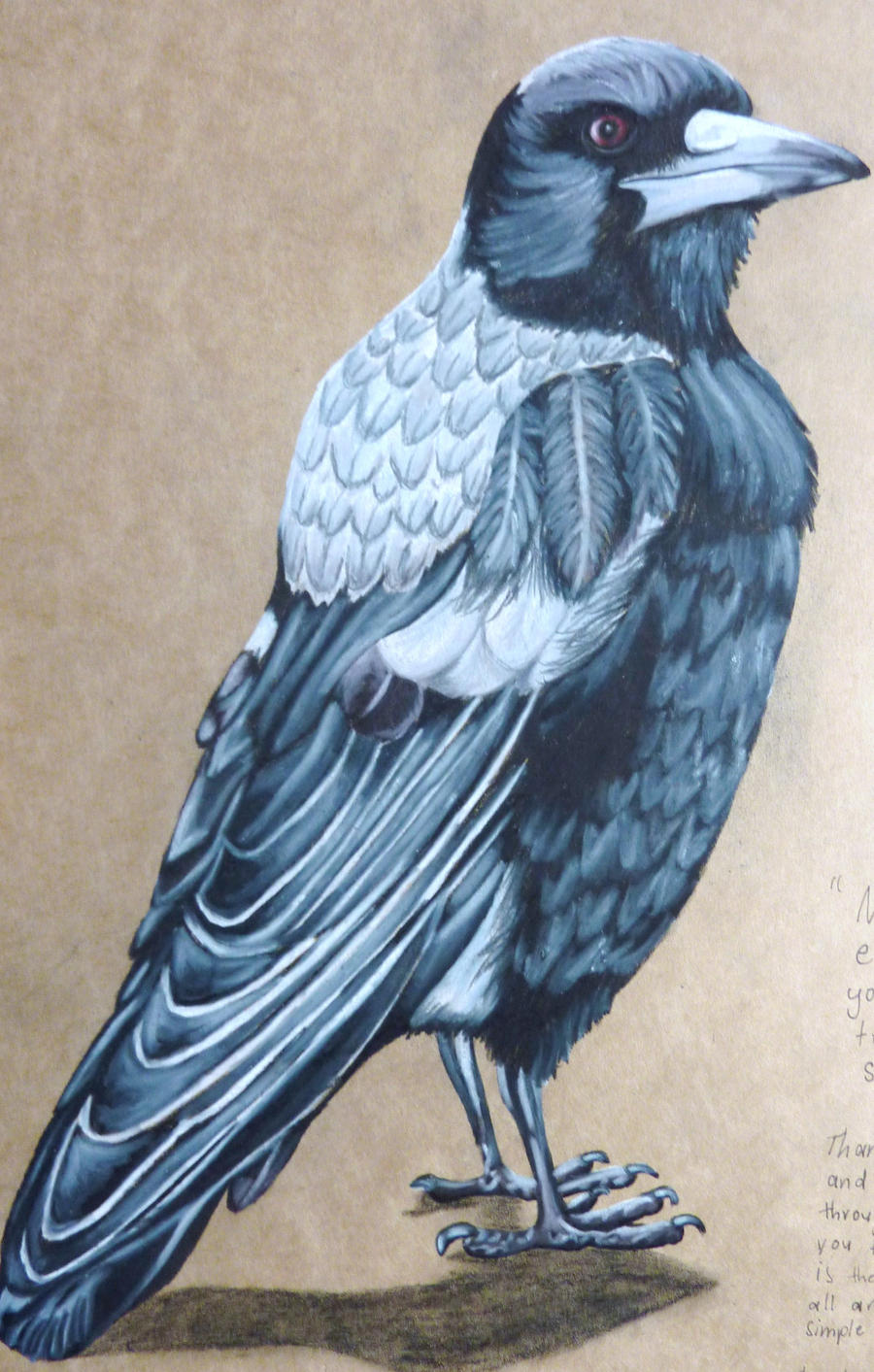 Standing Magpie by Noodlerelleh